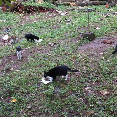 kucing-kucing liar