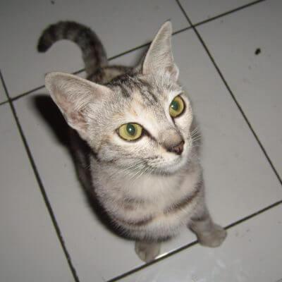 Kucing bisa melihat makhluk gaib?